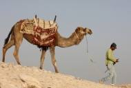 Judean desert camel and bedouin_746_497_100